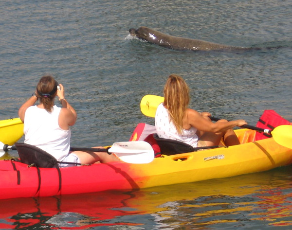 It's the kayakers! Wally comes on by to look things over and say hello.