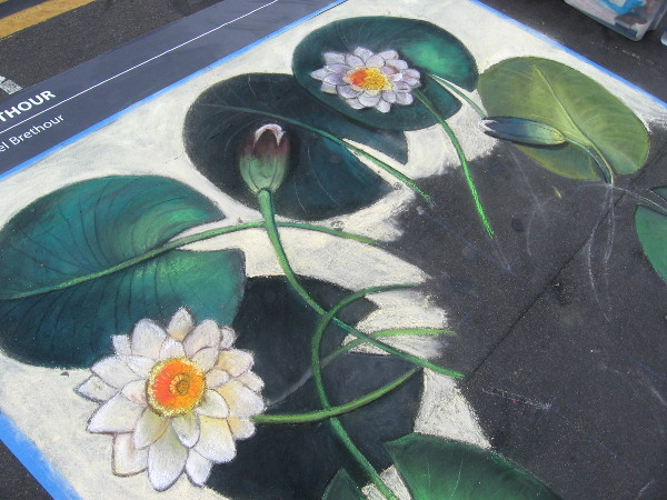 Lisa Bernal Brethour chalk art reproduces sketches of a famous botanist.