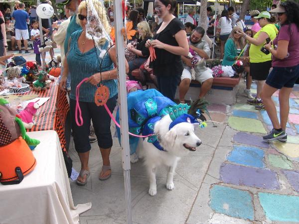 Dog enjoying the festivities in wonderful Balboa Park.