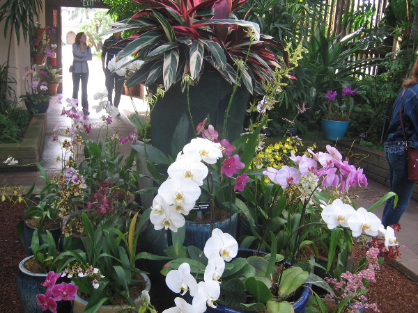 Beautiful orchids and other plants on display in Balboa Park's Botanical Building.