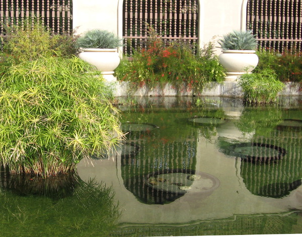 Lots of color can be found in this section of the reflecting pool, by the Botanical Building.