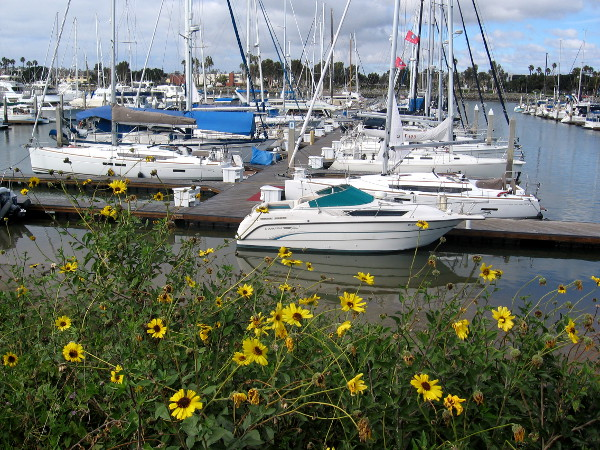 Boats docked in large marina between Harbor Island and Spanish Landing.