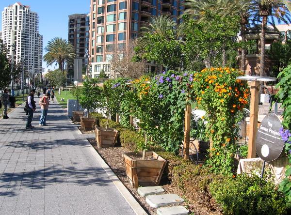 New Children's Museum Garden Project beside Martin Luther King Jr. Promenade.