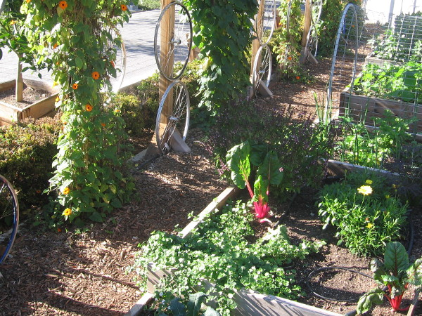 A few vegetables in plots enjoy the downtown San Diego sunshine!