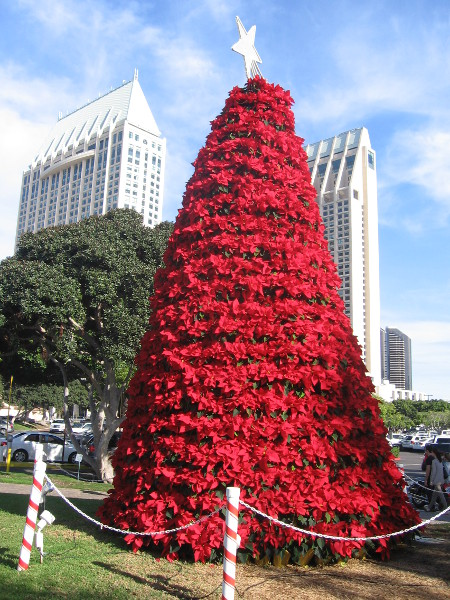 Manchester Grand Hyatt towers behind poinsettia Christmas tree at Seaport Village.