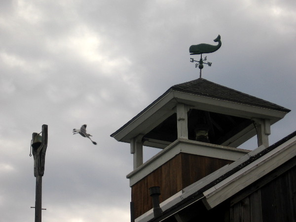 A whale atop Seaport Village's Pier Cafe swims above a flying gull.