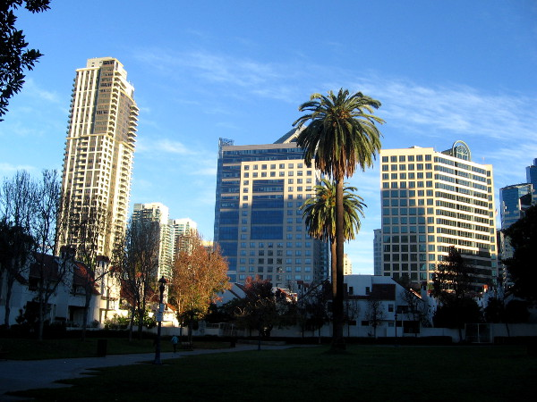 View of skyscrapers from Pantoja Park in San Diego's Marina District.
