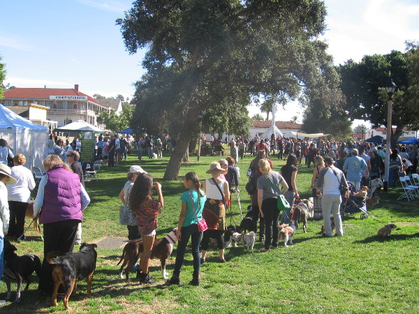 A long line of pet owners waited in Old Town during the Benediction of the Beasts.