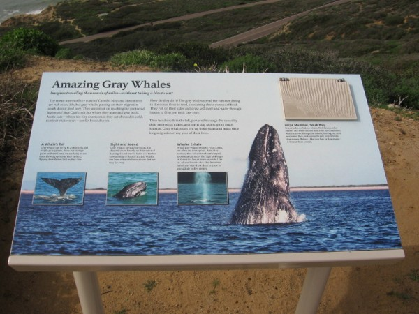 Gray whales migrate past Cabrillo National Monument from December through April. Spouts are often seen from here!