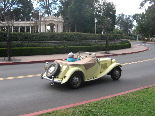 Guy drives his classic automobile through Balboa Park, heading to a special car show.