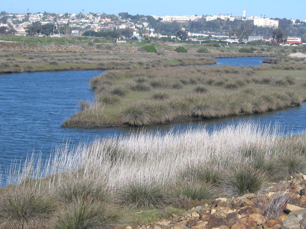The San Diego River estuary is one of the best birding spots in Southern California.