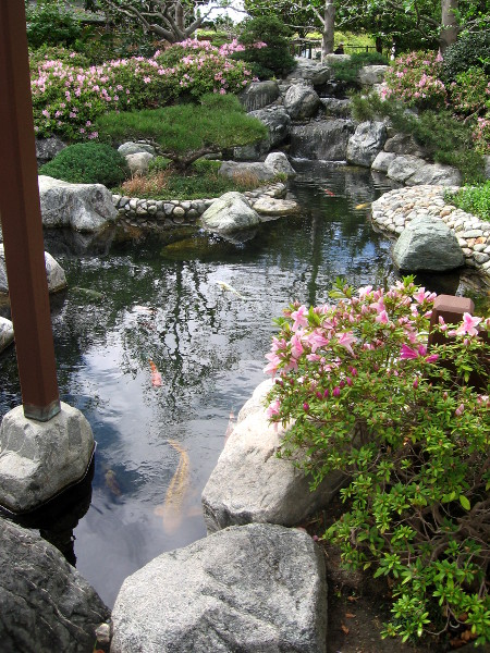 The amazing Koi Pond is a favorite spot to relax and feel alive.