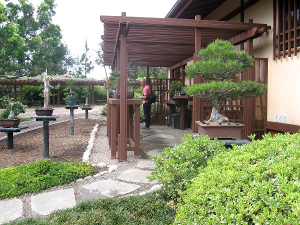 A special Bonsai Exhibit area.