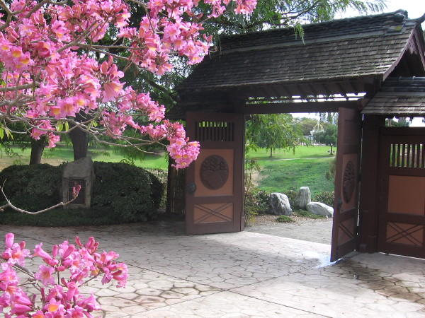The Charles C. Dail Memorial Gate leads into the canyon, where the Japanese Cherry trees await. That's another pink trumpet tree!