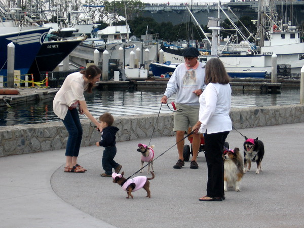Child, dogs and unheard words on the Embarcadero.