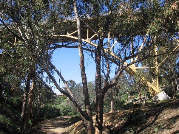 Here comes the First Avenue Bridge beyond a eucalyptus tree.