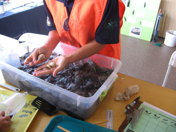 Investigating creatures one might find in a mudflat.