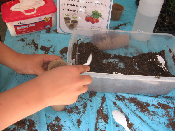 Planting some tomato seeds, to watch the plant grow at home!