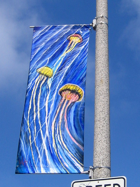Several jellyfish seem to soar through the blue sky.
