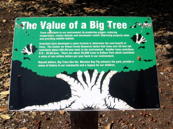 A big tree is a rare and valuable part of the ecosystem.