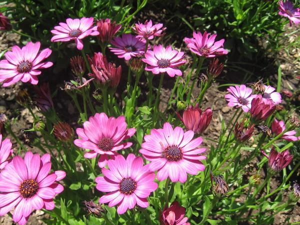 Beautiful flowers in Balboa Park.