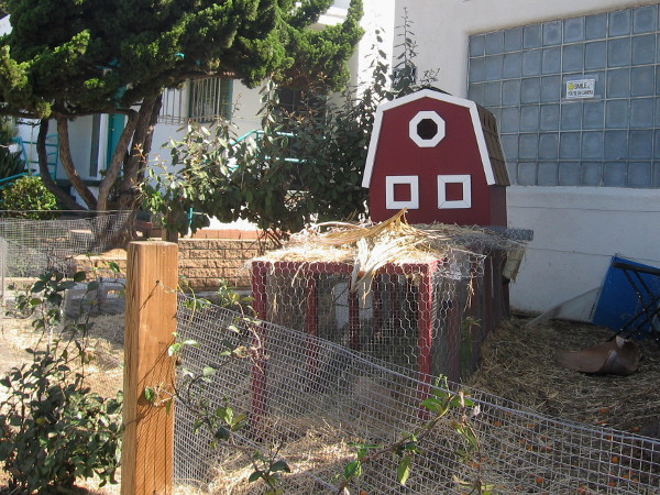 A tiny barn in a fun garden between the sidewalk and a local acupuncture and wellness center.