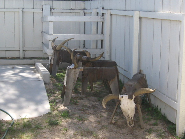 Look! We found some horned cattle corralled in a corner! Nope. Wrong again.