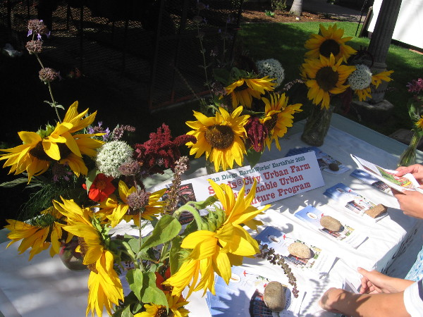 Bright sunflowers on table of urban farming advocates.