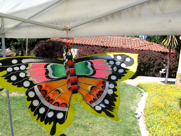 This butterfly was flitting about in the San Diego spring breeze.