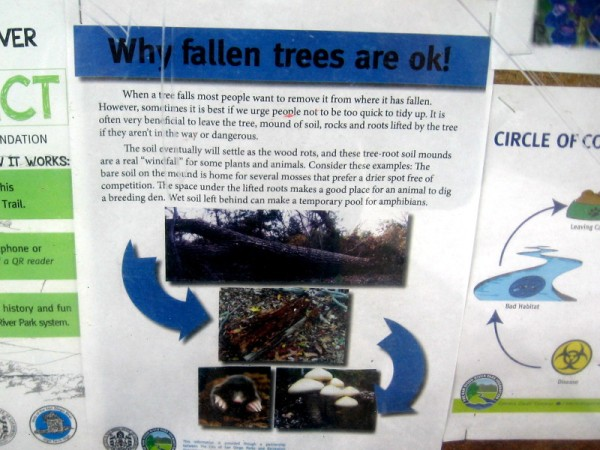 Sign beside the San Diego River Trail. Why fallen trees are okay! There are important benefits to the soil, flora and fauna.