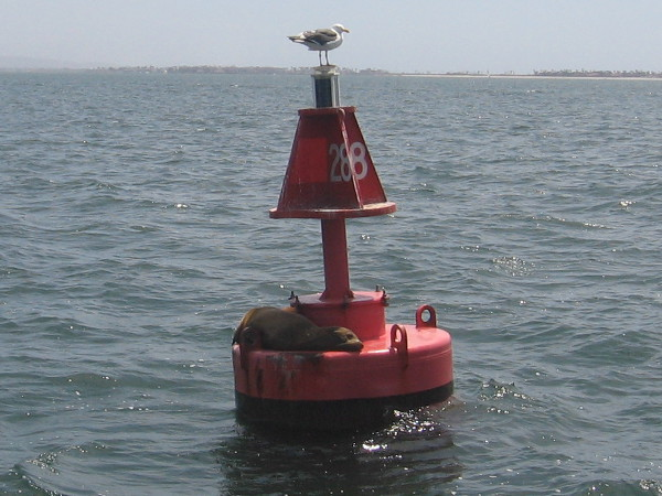 A watchful seagull and lazy sea lion share a harbor buoy on calm, sunny San Diego Bay.