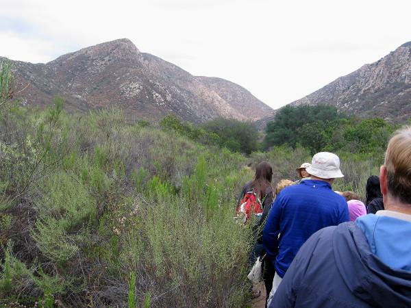 Hiking through common, aromatic Southern California sagebrush toward distinctive mountain, South Fortuna.
