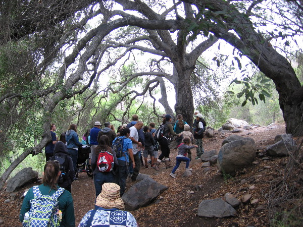 We approach the San Diego River, but first pass beneath a large arching tree. If you see a native tree in San Diego, there's probably water nearby!