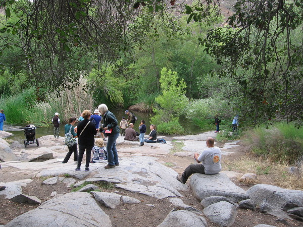 Smooth boulders on the bank of the San Diego River in Mission Trails Regional Park.
