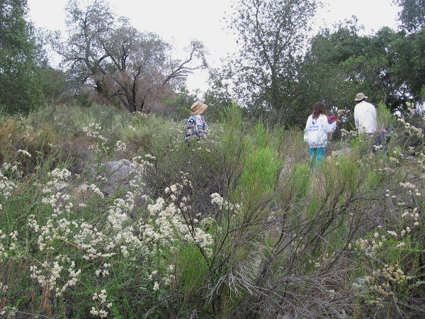 Starting back up toward the Visitor Center during a very cool hike in San Diego! If you go for a hike, bring water and sturdy shoes!