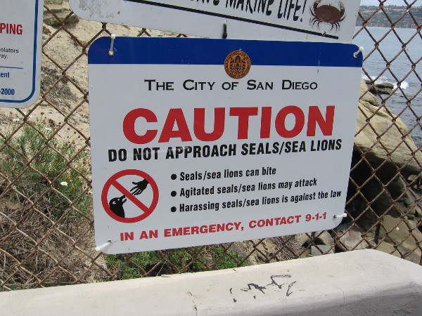 City of San Diego sign provides a warning. Caution, do not approach seals or sea lions! Harassing these marine mammals is against the law.