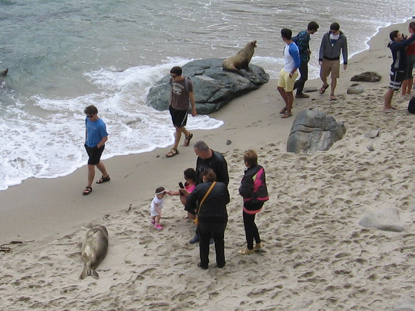 Agitated sea lion on a rock angrily confronts pestering people who don't seem to care.