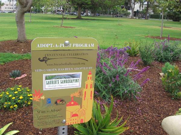 One example of Balboa Park's Adopt-A-Plot volunteer gardening program--this plot is in Sefton Plaza.