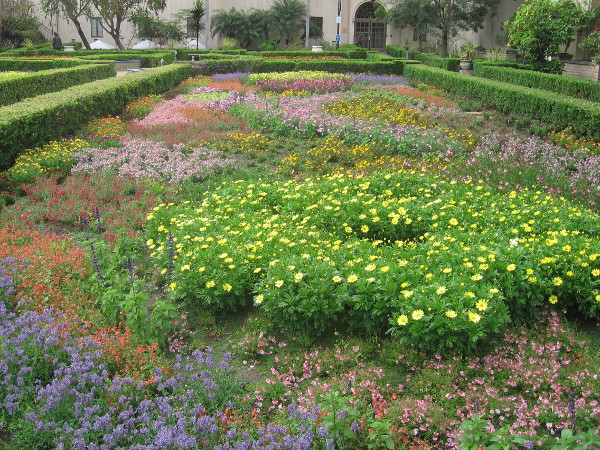 A photo I took this morning of beautiful flower beds in the Alcazar Garden.