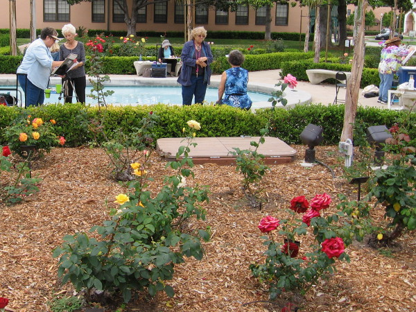 Members of the San Diego Watercolor Society practice painting portraits amid beautiful roses