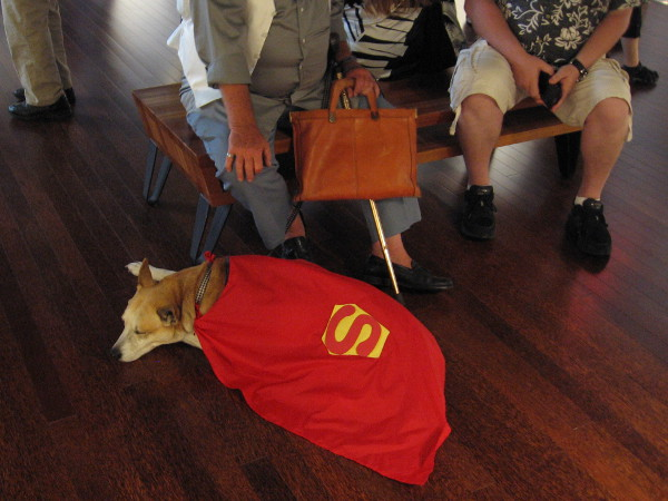 I spotted Krypto the Superdog taking a nap among more enthusiastic human Comic-Con fans.