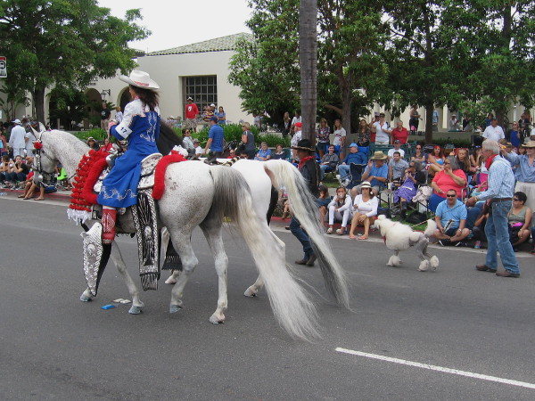 Beautifully groomed long-tailed horses and a poodle strut their stuff down the parade route.
