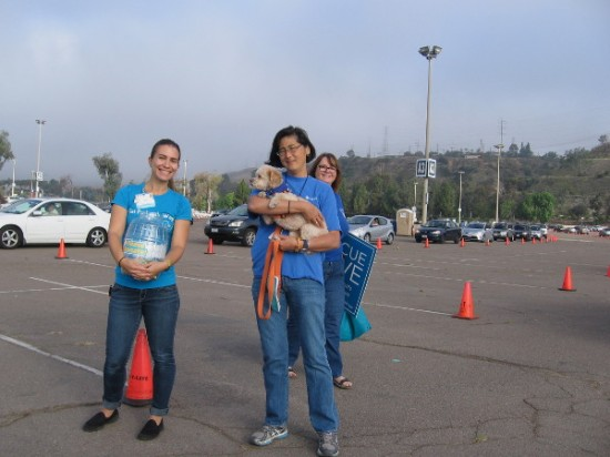 As cars queue, volunteers collect donations for the San Diego Humane Society and SPCA.
