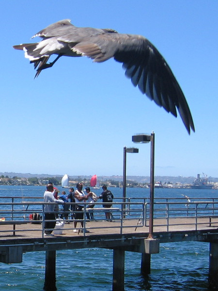 Gull takes flight near fishing pier at Embarcadero Marina Park South.