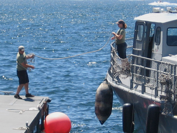 Throwing a rope as Maritime Museum of San Diego's restored Swift Boat returns from a harbor cruise.