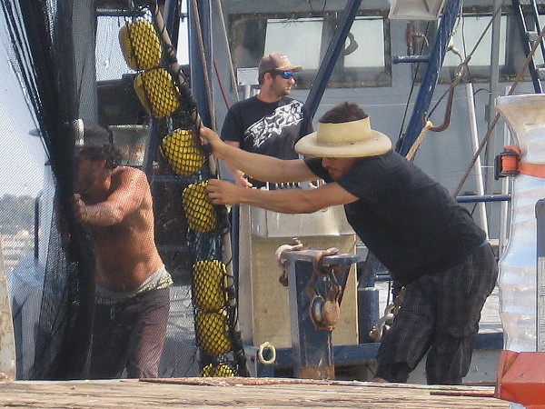 Crew of live bait-catching commercial fishing boat Cougar work to unspool immense net onto the G Street Pier at Tuna Harbor.