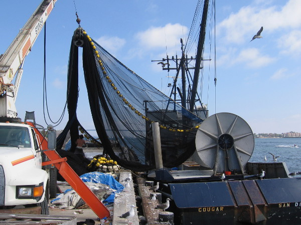 A crane is utilized to help transfer the heavy net from the boat's big cylinder-like winch drum at its stern to the pier.