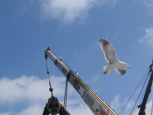 Lots of seagulls were attracted to this picturesque scene on San Diego Bay. Perhaps they expected to spot some fish.