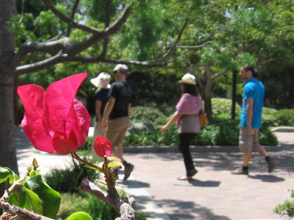 Visitors stroll through endless natural beauty at the Japanese Friendship Garden in Balboa Park.