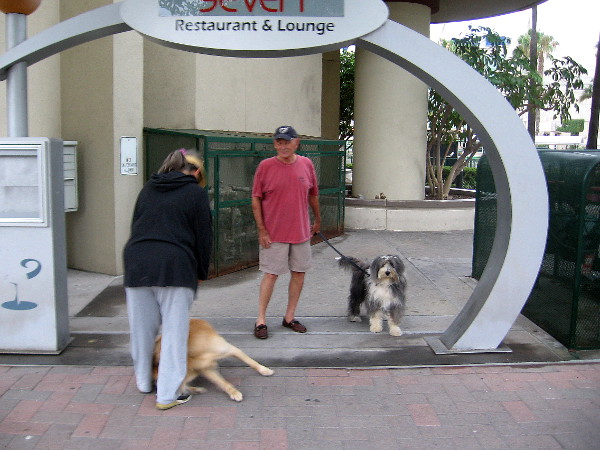 A dog also noticed that same curious guy, who just sauntered on by down the sidewalk.